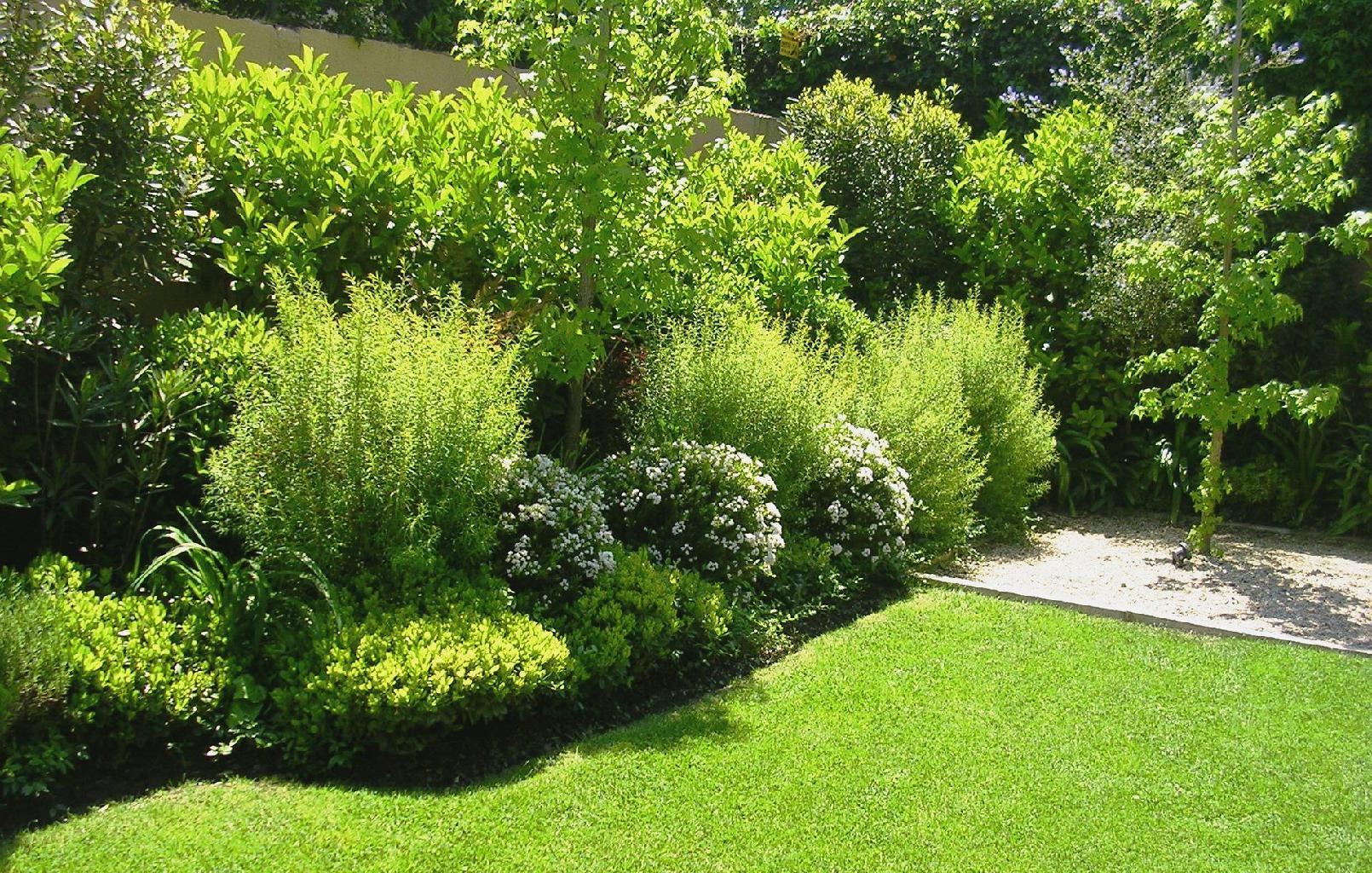 Jardines en panam grama fina panam for Vivero chicureo
