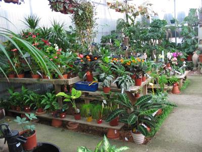 Un vivero es un conjunto de instalaciones agron micas en for Viveros en renca