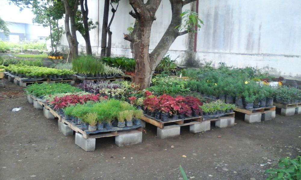 Viveros en panam grama fina panam for Viveros y jardines