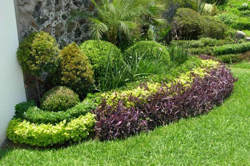 Dise o de jardines panama grama fina panam for Diseno jardines
