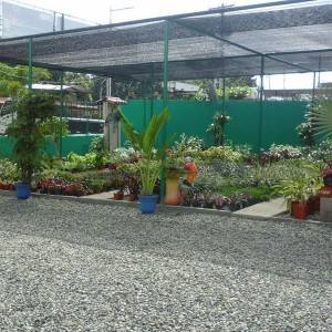 Viveros Panama