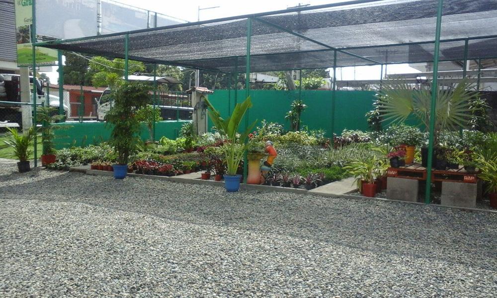 Venta de plantas en panam grama fina panam for Todo para viveros