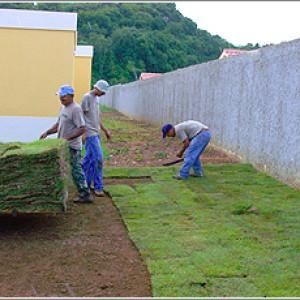 Instalación de Grama en PanamáInstalación de Past