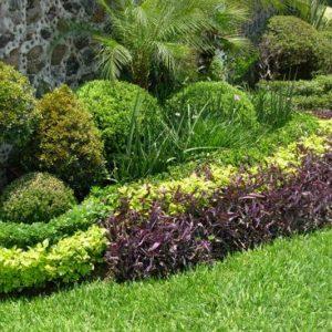 Diseño Comercial de Jardines en Panamá