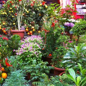 Venta de plantas para jardín en Panamá