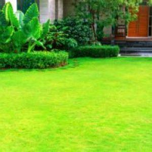 Cómo escoger la mejor grama para su jardín