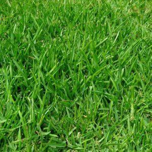 ¿Es la grama un productor o consumidor?
