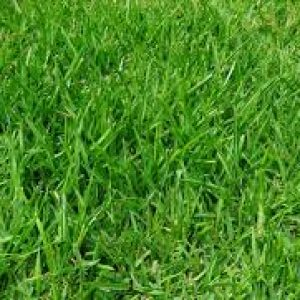 Venta de grama para paisajismo