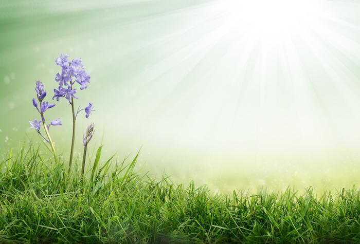 cómo cuidar grama en panamá
